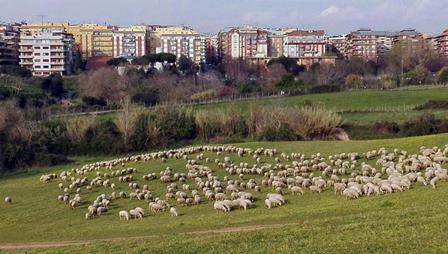 Pecore tosaerba e carbonara Raggi in fuga dalla politica